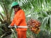 Campaign group accuses Liberia palm oil firm of exploiting Ebola crisis